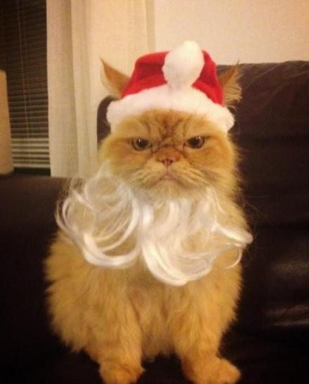 grumpyxmascat